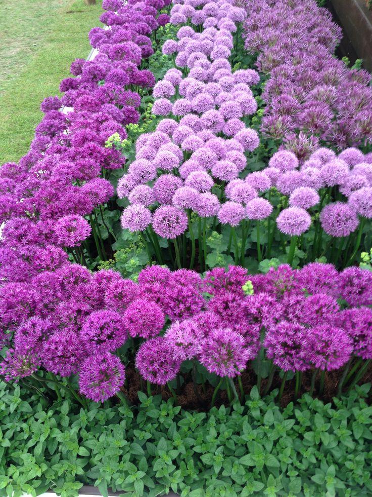 1000 imagens sobre campos de flores no pinterest campos - Dallas home and garden show 2017 ...