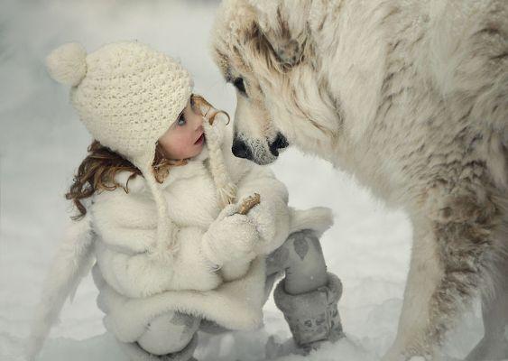 În grija băieţilor mari Bebeluşii supravegheaţi de câini uriaşi - Galerie Foto - zooland.ro