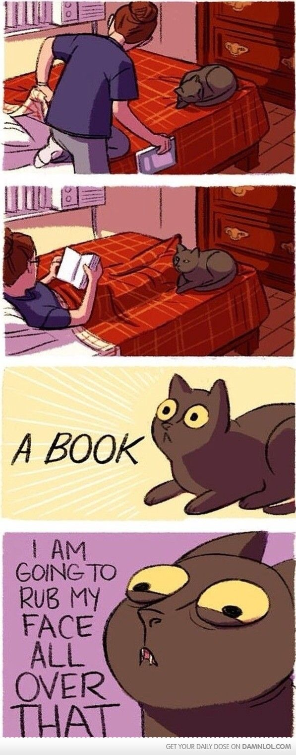 Cat Logic - Damn! LOL