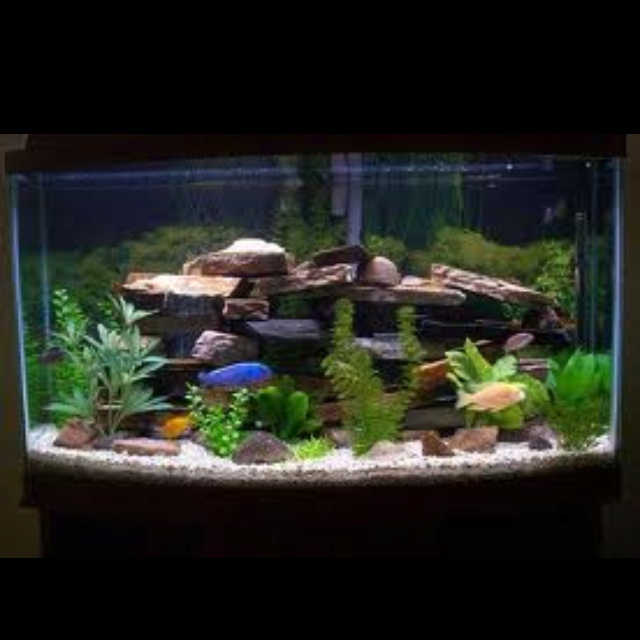 17 best images about 55 gallon fish tank remodel on for 55 gallon fish tank setup