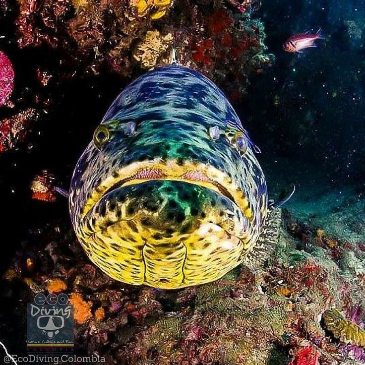 Do you recognize it?  •  Stamp your passport in the 2nd most biodiversity country in the world #Colombia   •  Book nowDM. #underwater #underwaterphotography #scuba #scubadiving #freediving #divers