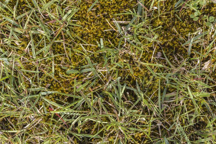 Eisendünger – Moos im Rasen bekämpfen