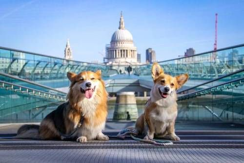 "javathecorgi: ""Sightseeing with my bae!  #london #love  (at Millennium Bridge, London) """