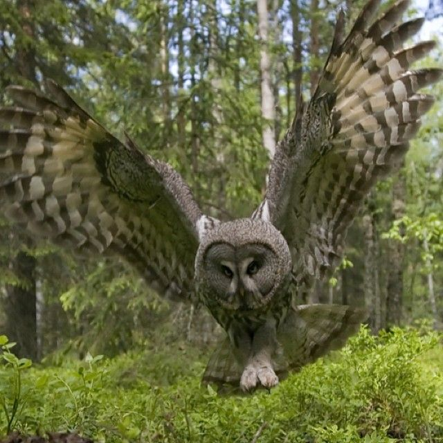 26 Best Owls Images On Pinterest Owls Owl And Tawny Owl