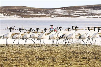 Tibet : Le royaume des animaux sauvages_Actualités_China Tibet Online
