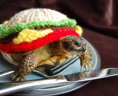 A tortoise in a hamburger wolley suit