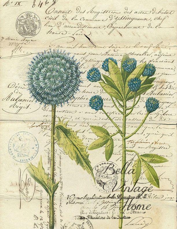 Botanical Print Blue Flower