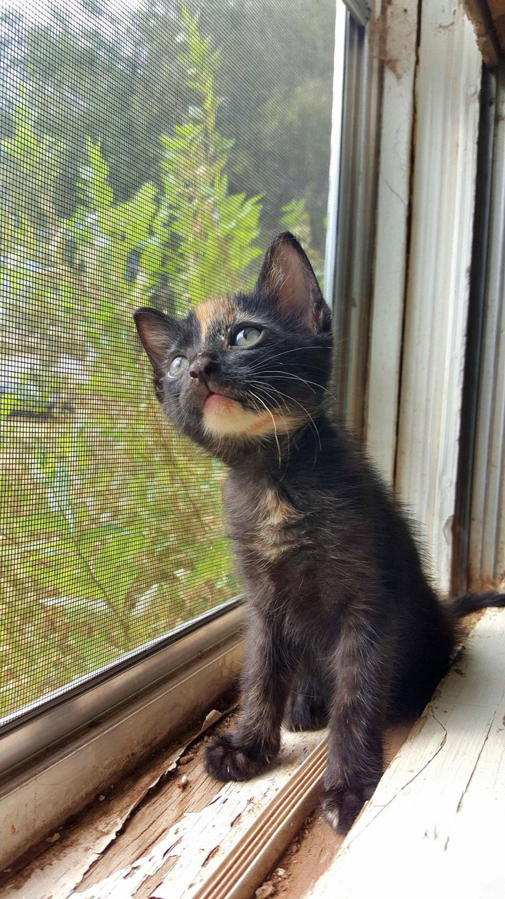 """* * """" Dat be de tree dat me gonna takes down single-pawdedly whens me finally gets letz outside.It be fulla strange lookin' birds too. Evens little dragons."""""""