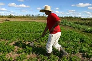 30 de Novembro - Dia da Reforma Agrária