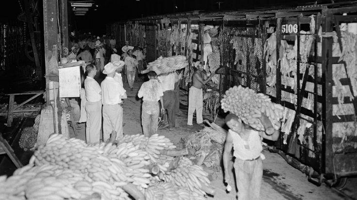 Banana loaders unload a car of bananas of the first shipment at the United Fruit Company docks for transfer to a waiting ship in Puerto Cort...