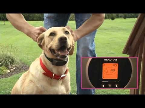 Pet Playgrounds Dog Fence Installation In Rocky Colorado A Customer S Install Video Youtube Stonefence Wireless Dog Fence Dog Fence Front Yard Fence