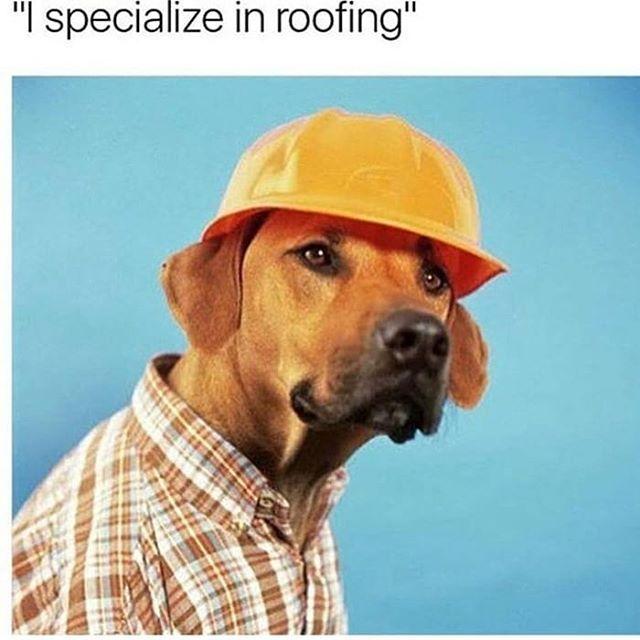 Hahahahaaaa #roofroof