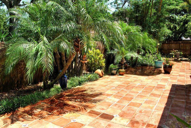 Pygmy Palm Trees Ideas For My Backyard Patio Backyard