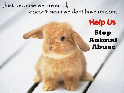Abuse Statistic Animal Testing   practical argument animal testing can be misleading an animal s ...