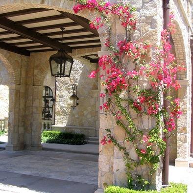 1000 ideas about climbing flowers on pinterest flowers for Imagenes de casas coloniales