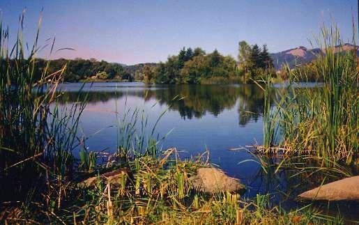 Spring Lake Regional Park, Santa Rosa, California- Bing Images