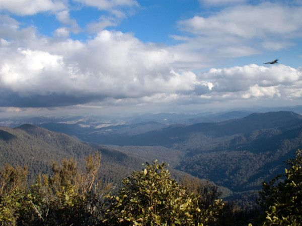 The forests of Barrington Tops #NSW are home to half of all the plant species found in #Australia! #biodiversity