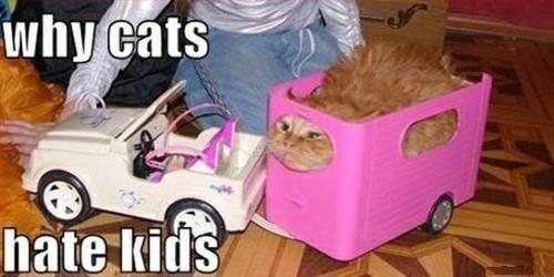 i remember doing something very similar but I think I dressed the cat...