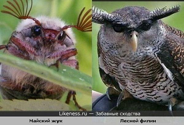 Картинки по запросу майский жук лицо