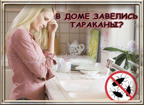 Как быстро вывести тараканов