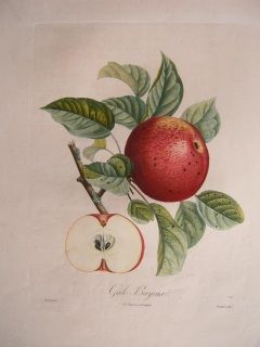Apple. Gayle-Bayeux. Stipple engraving printed in color. Langlois 1835. 540 x 360 mm