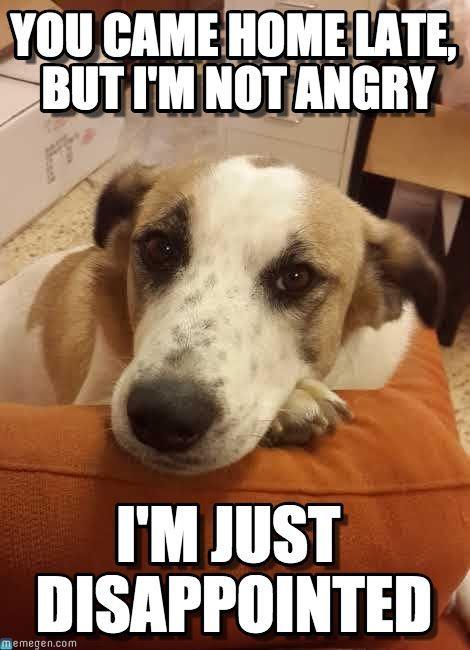 Cute Wallpapers Of Grumpy Cat Funny Dog Memes Clean Funny Dog Memes 2018 Dog Meme Face