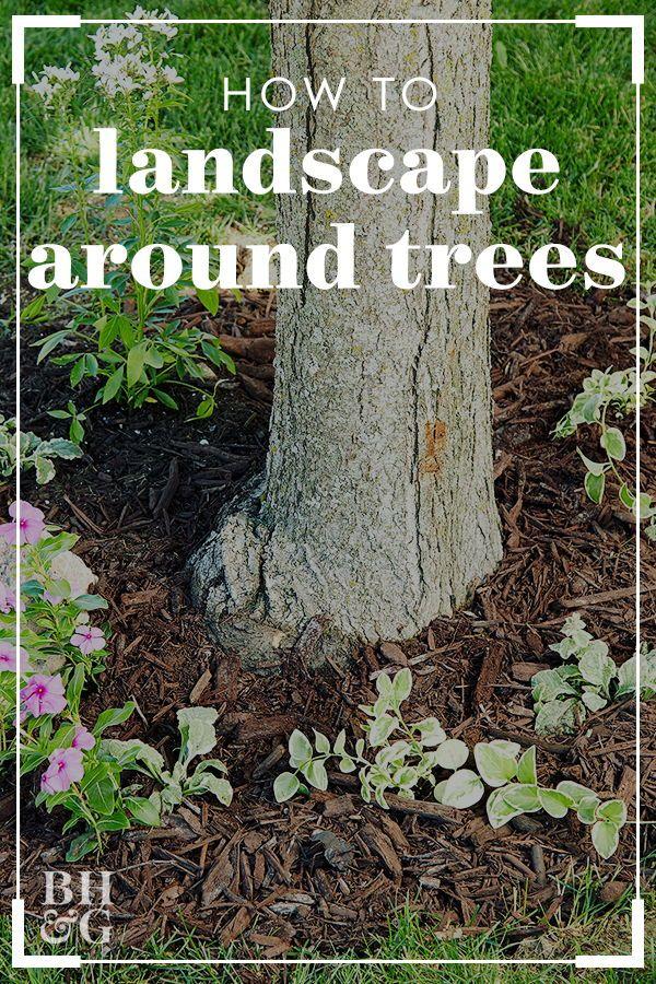 3 Easy Ways To Dress Up Trees In Your Landscape Landscaping