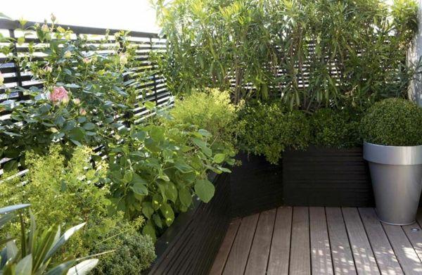 plantes grimpantes pour balcon vert toute l'année