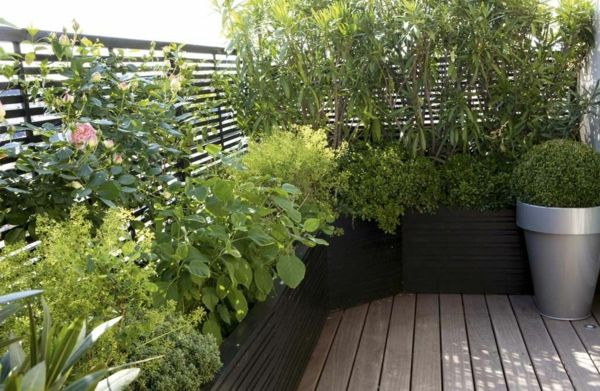 des plantes grimpantes pour balcon et terrasse on est. Black Bedroom Furniture Sets. Home Design Ideas