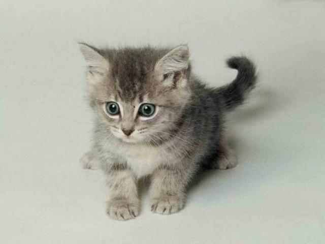 A cute huh?