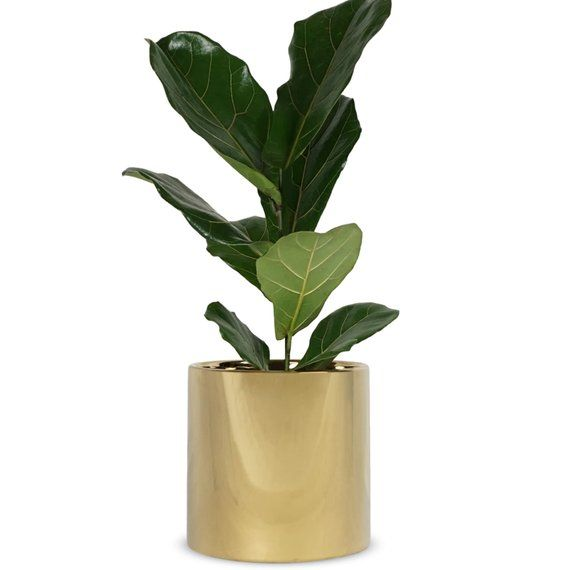 Gold Plant Pot Large Indoor Planter Flower Pot Modern Planter Ceramic Pot Gold 7 8 1 Large Indoor Planters Indoor Planters Modern Planters