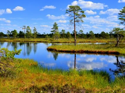 Kauhaneva- Pohjankangas suo- aluetta.