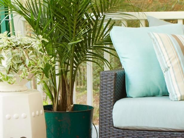 Although they make lovely houseplants,  majesty palms  ( Ravenea rivularis )  look especially nice on a porch where their fronds can move gracefully  in a breeze. Low light keeps them slow-growing; they'll do better in  medium to bright light. Keep their potting mix evenly moist, not wet.  Try a majesty palm in a large, well-lit bathroom for a touch of the  tropics.