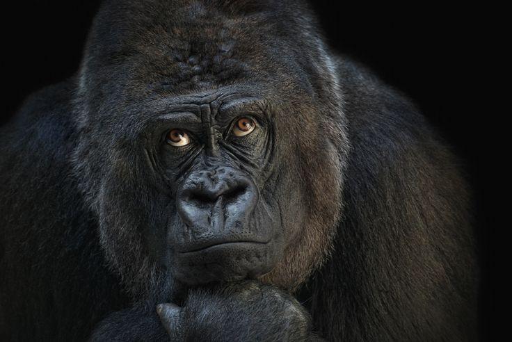 Photograph looking up by Joachim G.  Pinkawa on 500px