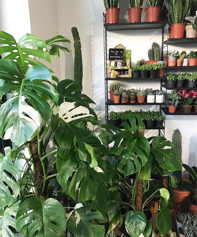 What with no light, dryness from central heating and frost outside on the ground, your carefully curated houseplant arrangement doesn't stand a chance this winter. Or does it? Instagram plant faves geo_fleur give us some tips.