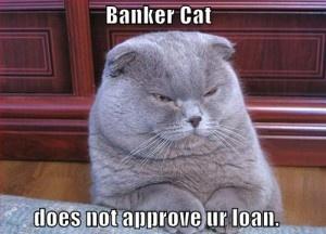 Banker Cat: Folding Cat, Banker Cat, Funny Pictures, Scottish Folding, Funny Cat, Fat Cat, Funny Animal, Fatcat, Cat Breeds