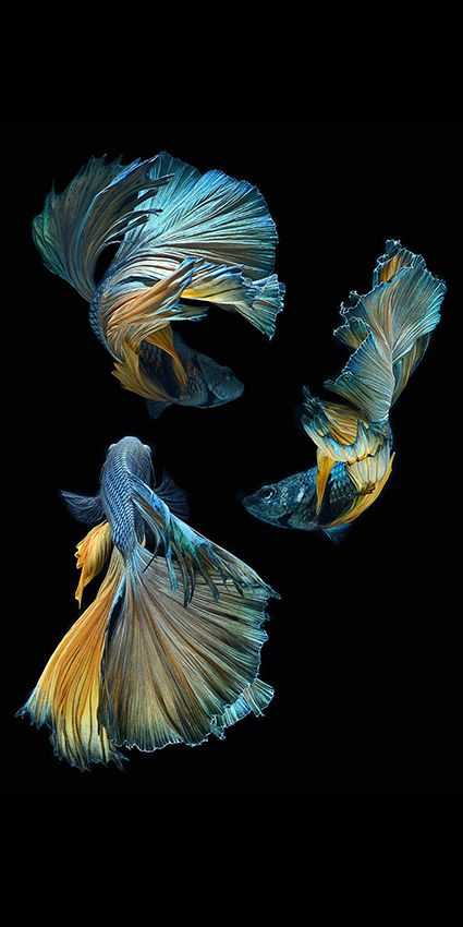 Fish by Visarute Angkatavanich                                                                                                                                                                                 More