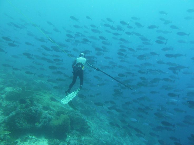 10 best images about spearfishing on pinterest for Best fishing in florida keys