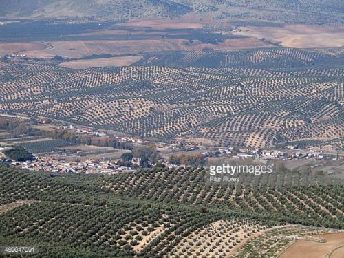 05-08 Endless fields of olive groves in the mountains near... #deifontes: 05-08 Endless fields of olive groves in the mountains… #deifontes