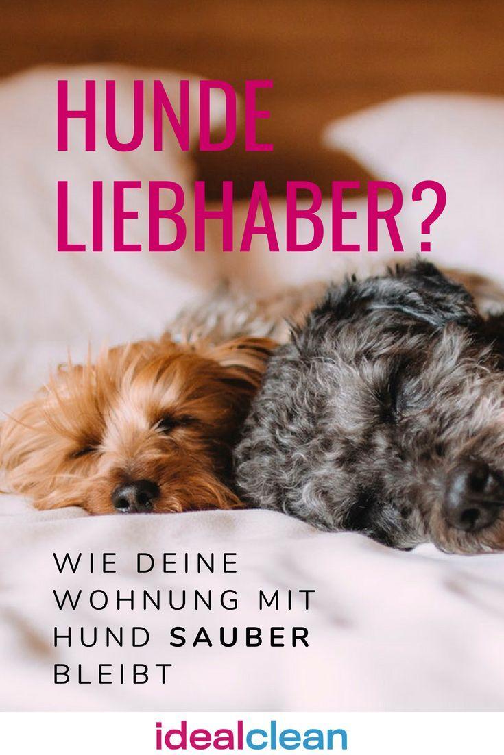 Sauberes Zuhause Mit Haustieren So Geht S Idealclean Blog Haustiere Tiere Haustier