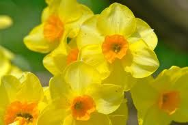 spring images - Google Search