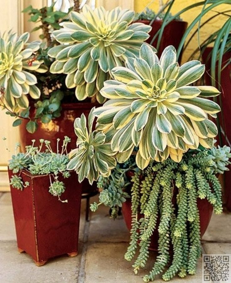 12. Go Big! - 43 #Outstanding Succulent #Gardens You Can Create at Home ... →…