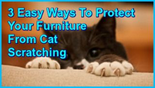 3 Easy Ways To Protect Your Furniture From Cat Scratching. too late to save my poor midcentury couches