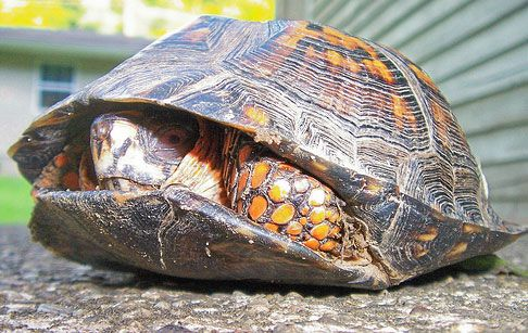 All About Turtles - How They Differ From Tortoises? - Easy Science For Kids