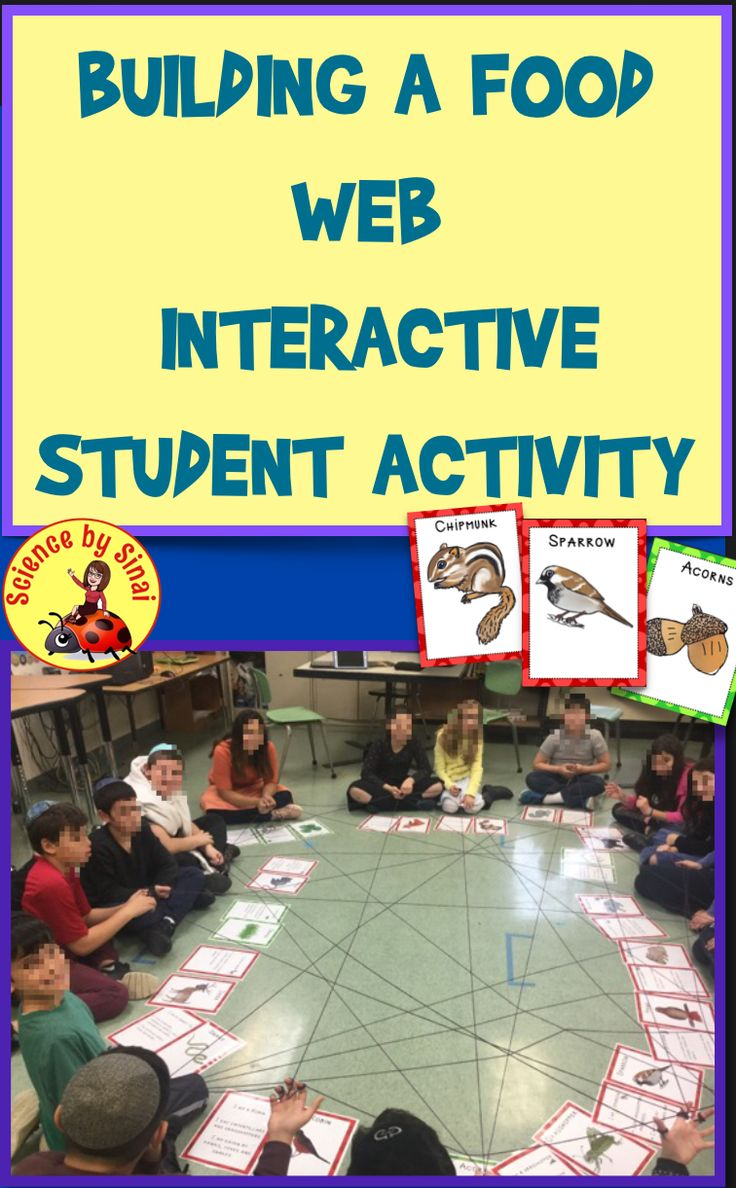 Build an Interactive STUDENT FOOD WEB! Food chain Activity