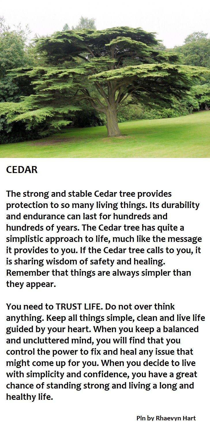 ∆ Enchantments... Cedar Tree