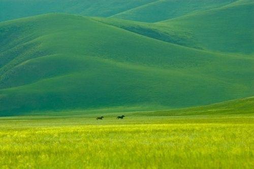 thisiswhatidoinmyworkhours:    Mongolia