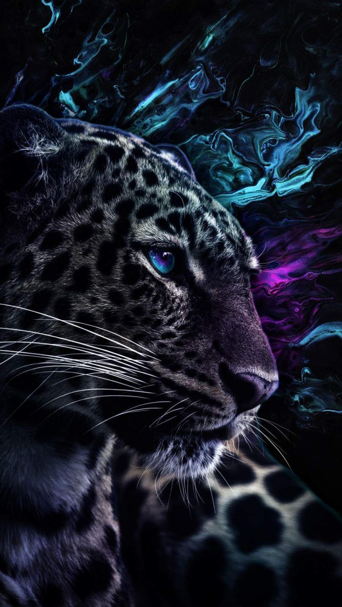 Heterochromia Lion Iphone Wallpaper Iphone Wallpapers Iphone Wallpapers Wild Animal Wallpaper Jaguar Wallpaper Tiger Spirit Animal