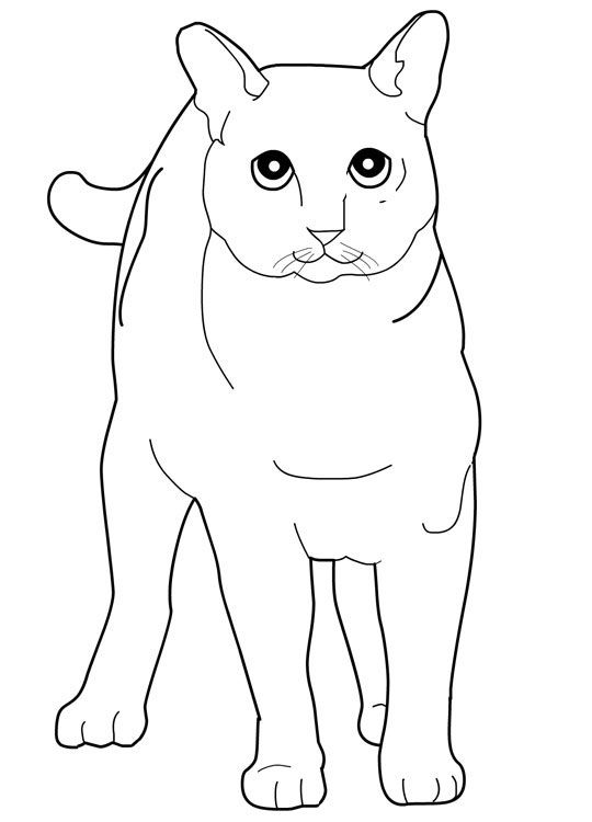 cat color pages printable cats coloring pages tonkinese cats kids printables coloring pages
