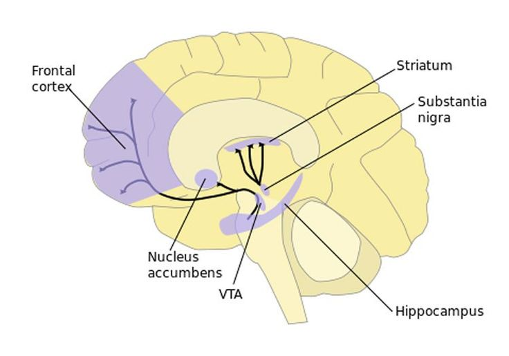 Antidepressants Reduce Neuropathic Pain by Altering Signaling Protein Levels in Nucleus Accumbens